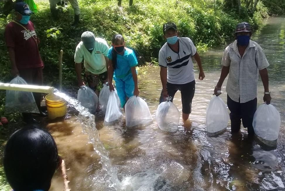 Unos 4,200 alevines de tilapias doradas fueron sembrados en estanques. Foto: Cortesía/Mides