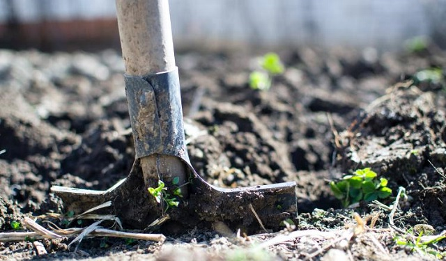 La FAO promueve la agricultura sostenible en América Latina y el Caribe. Foto. Ilustrativa / Pexels