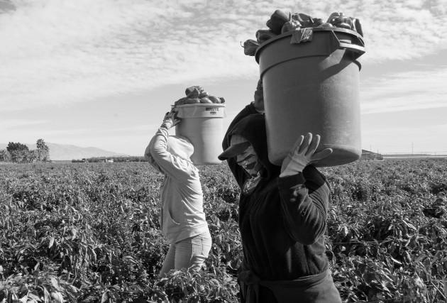 El productor nacional trata de implementar métodos sostenibles, cambios tecnológicos y medidas de bioseguridad que garanticen la calidad de sus productos, pero no es sencillo, ni barato. Foto: EFE.