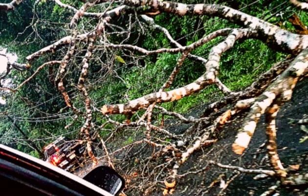 Además de las inundaciones, se dieron voladuras de techo y caída de árboles. Foto: Diomedes Sánchez