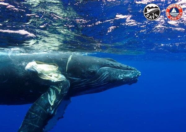 Involucrar al sector marítimo internacional para evitar las colisiones de barcos con ballenas es el objetivo de la