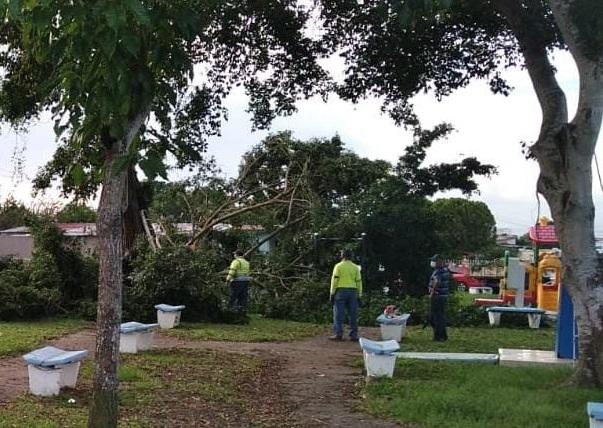 La caída de los dos árboles afectó un poste eléctrico. Foto: Cortesía MiAmbiente