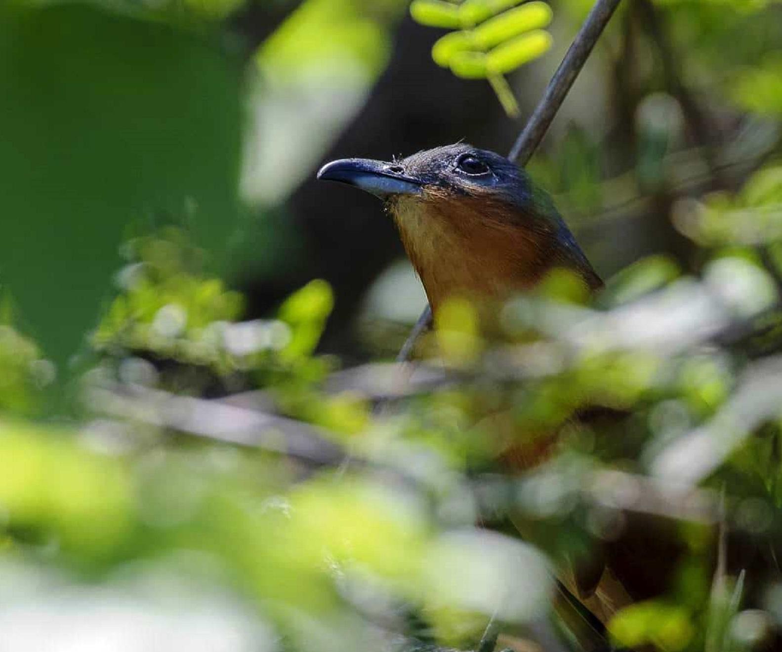 Al ave avistada en Sarigua se le conoce comúnmente como