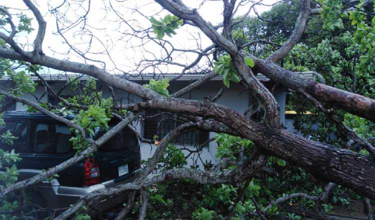Por lo general, en la segunda mitad del año es que más se registran caídas de árboles por las lluvias. Foto: Archivo