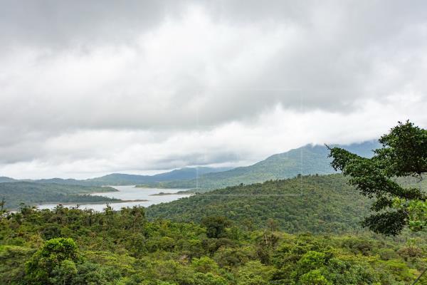 El 65.4% del territorio de Panamá está conformado por bosques y otras tierras boscosas.