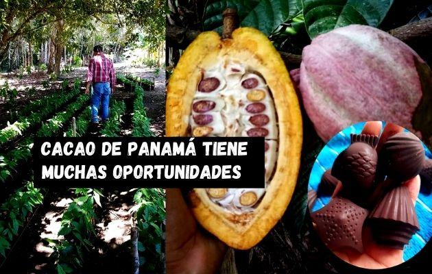 El cacao panameño busca unificar proceso y potenciar su calidad. Foto: Karol Lara