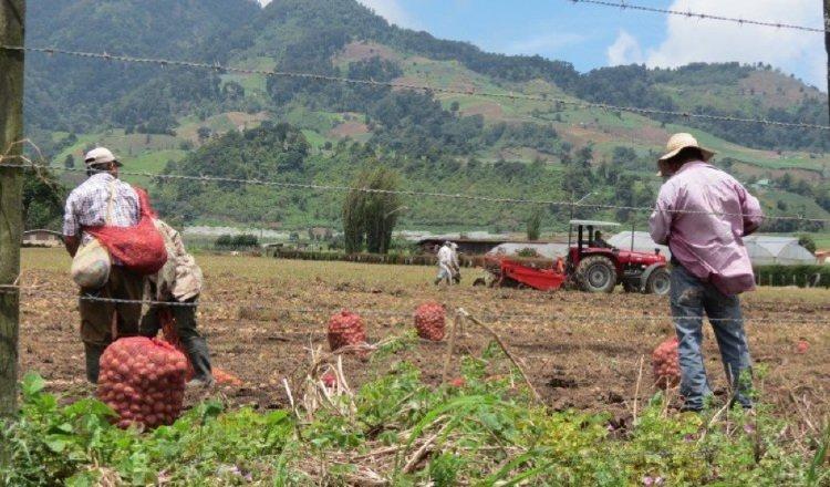 APA, que tendrá una Junta Directiva integrada por los titulares del MIDA, Minsa, y MICI, es el reemplazo de la Autoridad Panameña de Seguridad de Alimentos (Aupsa). Foto: Archivo