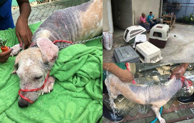 Maltrato animal en Panamá se incrementa a pesar de ley que castiga esa conducta. Foto: Panamá América.