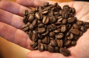 Honduras vendió 3,79 millones de quintales de café. EFE Archivo