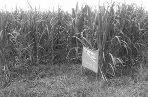Uso adecuado y manejo sostenible del plástico en la agricultura. Foto: Cortesía del autor.