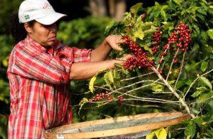 El consumo de café en los hogares ha aumentado y ha mejorado los precios a nivel internacional lo cual es positivo para los productores. EFE