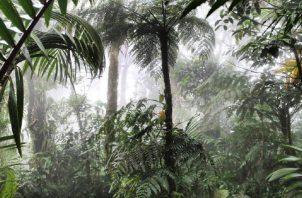 Conservar y gestionar de forma sostenible la diversidad biológica es necesario para mitigar las perturbaciones climáticas