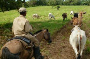 Incentivo busca beneficiar al sector agropecuario.