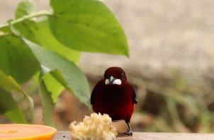 Toda especie cuenta para fotografiar en la celebración del Día Mundial del Medio Ambiente.