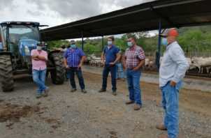 Los más afectados son los ganaderos, así como productores de rubros como tomate industrial, arroz, entre otros. Foto: Thays Domínguez.