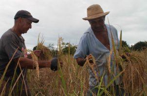 El ministro de Desarrollo Agropecuario, Augusto Valderrama, dijo que están cumpliendo con el compromiso de apoyar a los productores con financiamientos para que sigan cultivando con eficiencia.