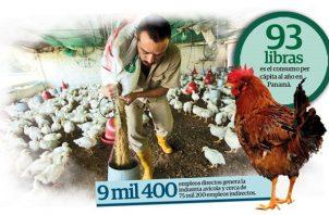 En la avicultura panameña participan un importante número de medianos y pequeños productores.