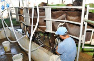 Panamá no es autosuficiente en producción de leche.