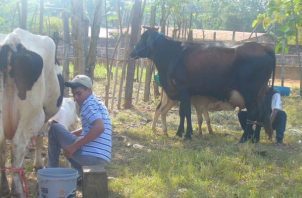 El 90 % de la leche deslactosada que se consume en Panamá es provista por Dos Pinos.