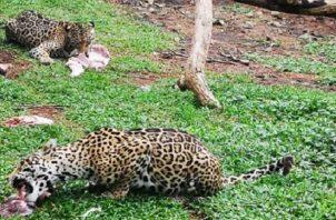 En el Níspero hay cerca de 700 animales.