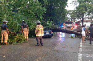 Auto afectado por caída de árbol en la comunidad de Margarita. Fotos: Diómedes Sánchez.