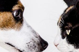 En el caso de los perros el especialista señala que hay estándares de peso establecidos. Pixabay