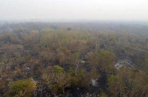 Los incendios en el mes de agosto registraron una tímida reducción frente a los del mismo mes del año anterior, mientras la tala ilegal avanza sin tregua en la Amazonía, que está en camino de cerrar 2020 con un récord de área devastada. FOTO/EFE