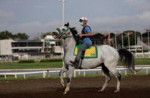 Un jinete cabalga en el Hipódromo Presidente Remón. Foto:EFE