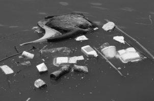 Botamos la basura indescriminadamente. Tiramos basura en ríos y quebradas que van a dar al mar. Foto: Archivo. Epasa.