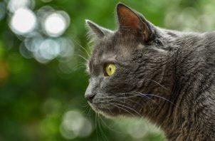 Los gatos son más autónomos que los canes. Foto: Ilustrativa / Pixabay