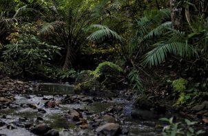 En el Parque Nacional Camino de Cruces se puede disfrutar del bosque húmedo tropical. Foto cortesía.