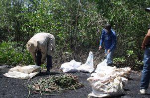 La extracción de mangle para laelaboración del carbón, ha sido por generaciones la principal fuente de empleo para las familias de Espavé, junto a la venta de pescado y almejas. FOTO: ERIC MONTENEGRO