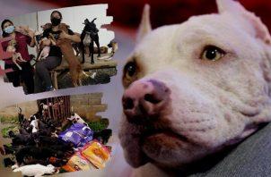 La Dirección Nacional de la Policía Ambiental, Rural y Turística (Dinapart) registra hasta 300 casos mensuales de abandono y maltrato animal. Foto Cortesía