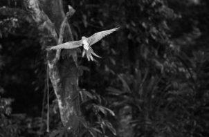 En América Latina y el Caribe, la reducción promedio del tamaño de las poblaciones estudiadas, 4,392 especies de mamíferos, aves, peces, reptiles y anfibios, alcanza proporciones todavía más alarmantes. Foto: EFE.