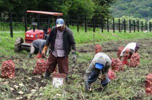 La producción en Tierras Altas está paralizada al 100%.
