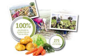 Se calcula que en Tierras Altas hay 800 productores que cultivan unas mil 500 hectáreas con hortalizas.