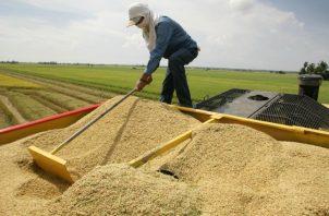 Los arroceros afirman que no han podido salir de su recurrente crisis, lo que ha provocado que más de 643 productores hayan abandonado la actividad en los últimos años.