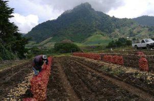 Los empresarios consideran que el objetivo debe ser brindar al consumidor panameño variedad de productos de calidad al mejor precio. Foto/Archivo