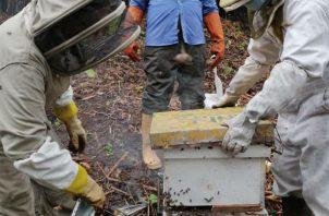 En el apiario se va a generar aprendizaje para mejorar la actividad en la región. Foto: Diómedes Sánchez S.