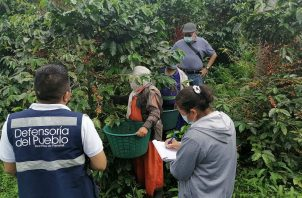 Las visitas buscan sensibilizar en las fincas sobre los riesgos del trabajo infantil. Foto: Mayra Madrid.