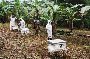 La miel panameña es catalogada artesanal y de alta calidad. Cada provincia produce miel con diferentes colores, olores y sabores. Foto/Cortesía