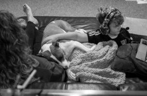 Las mascotas han brindado ese soporte emocional y cariño a muchas familias, porque han ganado ese espacio de convivencia con sus dueños. Foto: EFE.