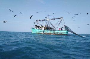 En la lucha contra la pesca ilegal se ha puesto en marcha el proyecto de trazabilidad del producto pesquero para terminar con esta práctica que se realiza en todos los océanos del mundo y pone en peligro el medio ambiente, la economía y la salud.