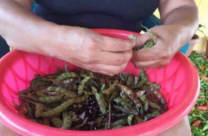 La venta de guandú beneficia no solo a los productores, sino también a desgranadores e intermediarios.