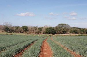 Esto se decidió, luego de hacer un análisis de las cifras de avance de siembra, cosecha.
