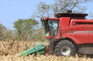 De las 15 mil hectáreas, 14 mil corresponden a siembra de mecanizada y el resto a chuzo con tecnología. Foto/Cortesía
