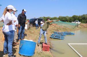 Los pequeños como medianos productores de tilapia y camarones que menos recursos tienen. Cortesía