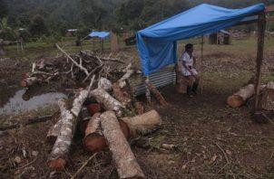 Las pequeñas cabañas hechas de bambú que son construidas por los invasores, son custodiadas en algunos casos hasta con machete en manos. Víctor Arosemena