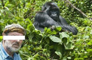 Los gorilas pueden enfermarse de la covid-19.
