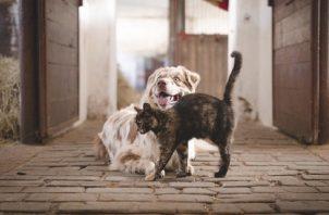 Es primordial que desparasite a sus perros o gatos, por lo menos, dos veces al año. Foto: Ilustrativa / Pixabay